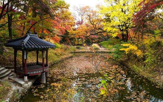 Mùa Thu Hàn Quốc ở Seoul