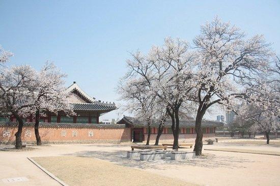 Mùa Xuân ở thành phố du lịch Seoul