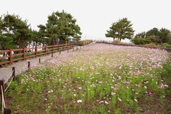 Đồi Swiri trên đảo Jeju