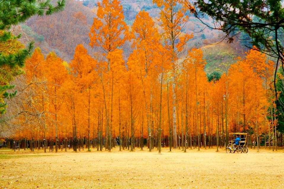 tour-busan-seoul-everland-nami-6n5d-2