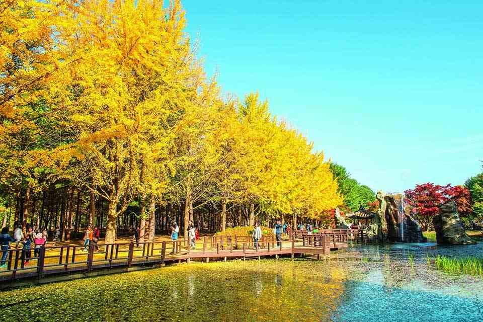 tour-han-quoc-4-ngay-4-dem-seoul-cong-vien-bau-troi-everland-floating-island-3