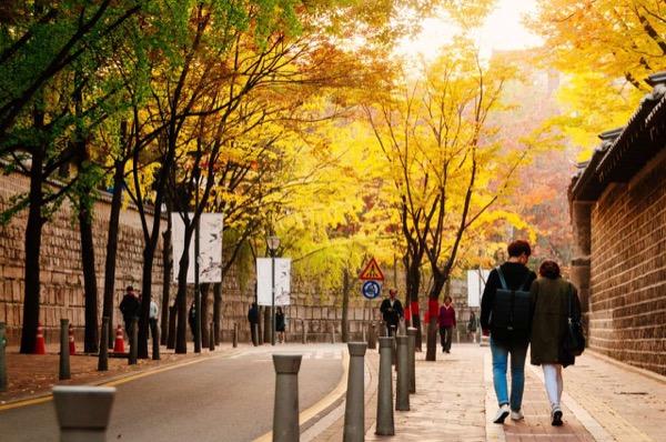 Con đường dọc cung điện Deoksugung vào mùa lá đỏ ở hàn quốc