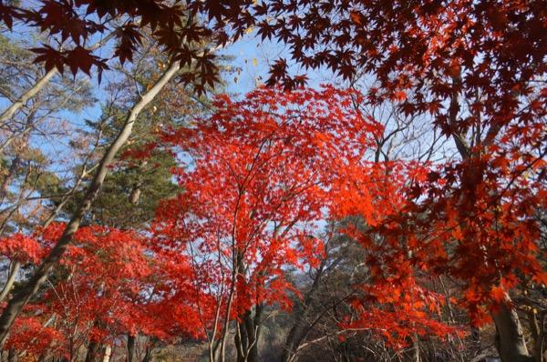 Núi Songnisan mùa lá đỏ hàn quốc